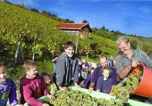 Metzingen im Ermstal - Excellente Weine seit 700 Jahren!