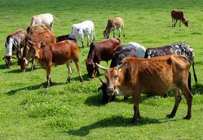 Gute Wurst- und Fleischspezialitäten aus dem Biosphärengebiet Schwäbische Alb